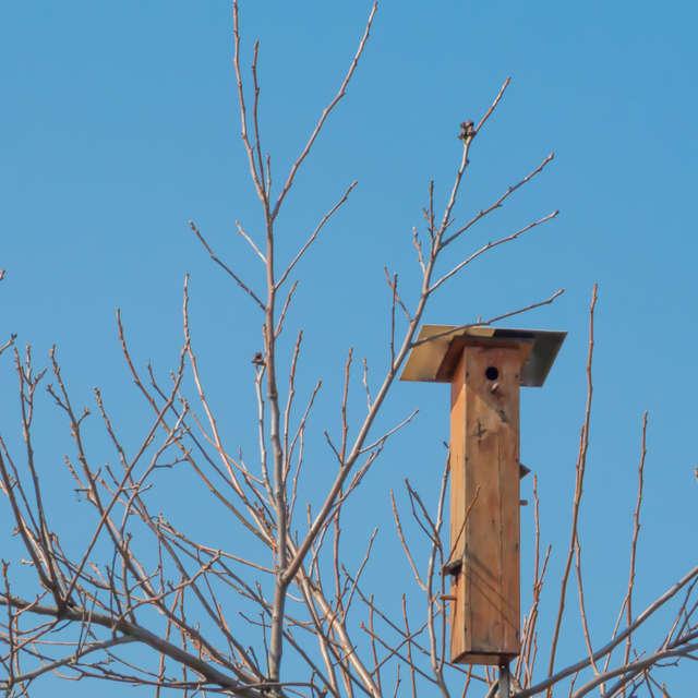 Domek dla ptaków, słonecznie