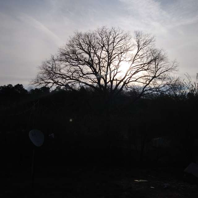 Sunrise in the backwoods