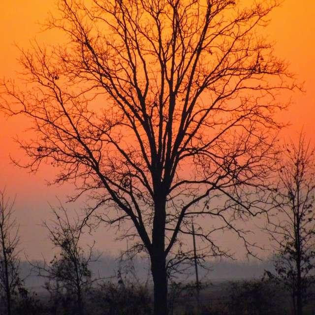 Tree And Fog At Sunrise