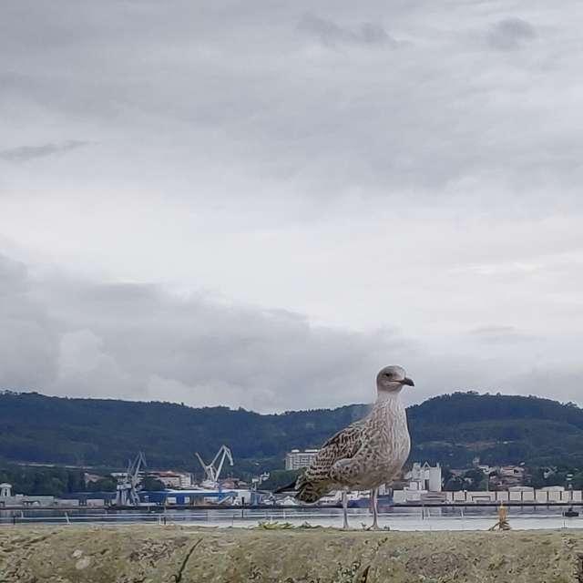 La protagonista del puerto.