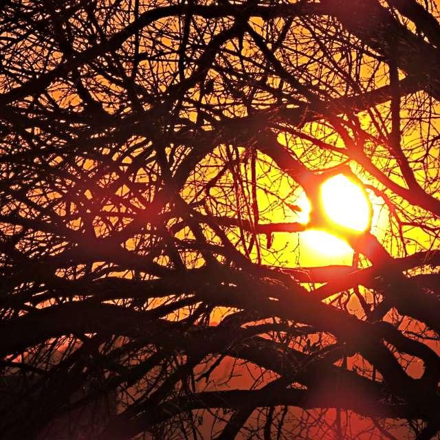 Pôr do sol na árvore