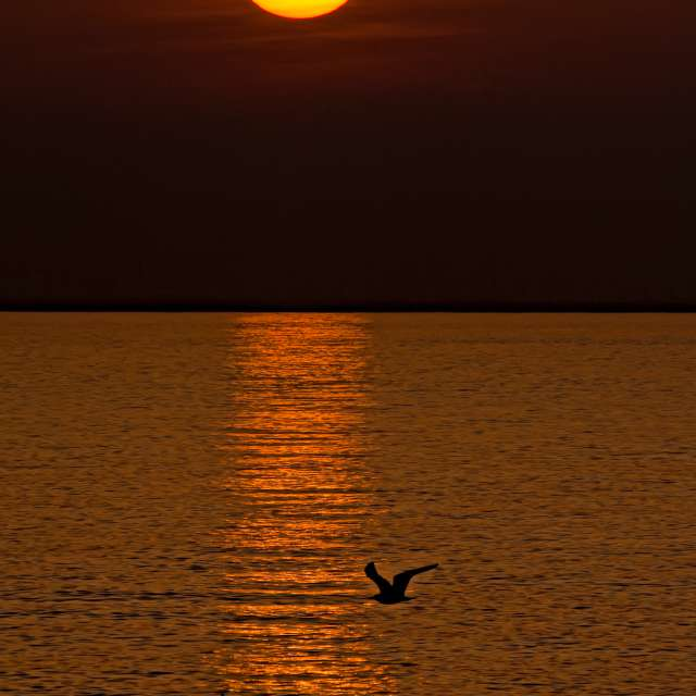 Sunset and Flying Birds, Italy