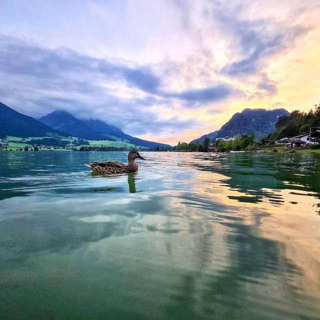 Walchsee in Tirol