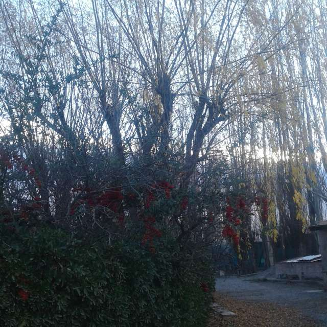 Lindos árboles