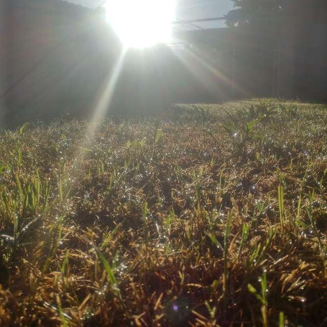 Sol, rocío y pasto.