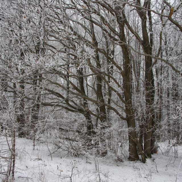 Лес в инее