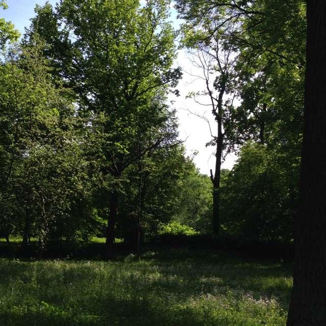 Красивый летний лес