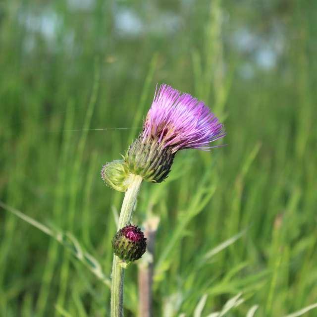 flower on sunlight