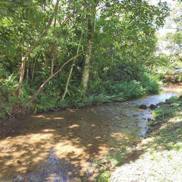 Riacho, cachoeira, árvores, ar