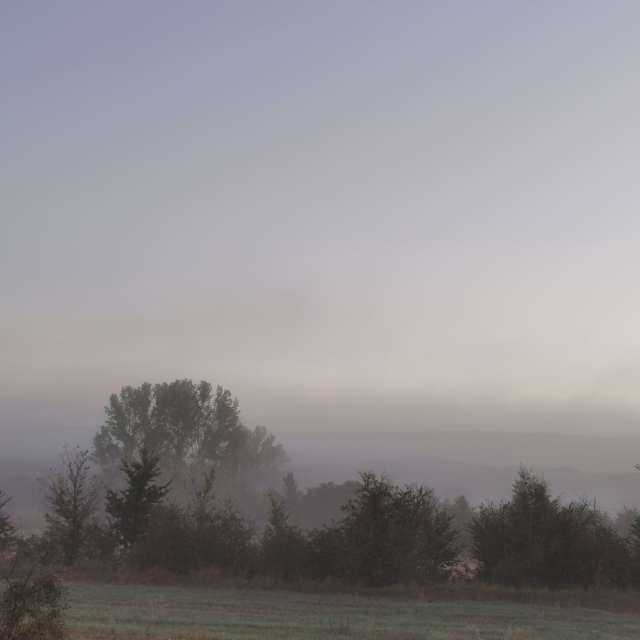 Niebla en el campo
