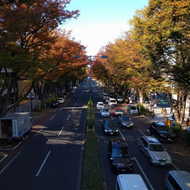 Autumn leaves ♪