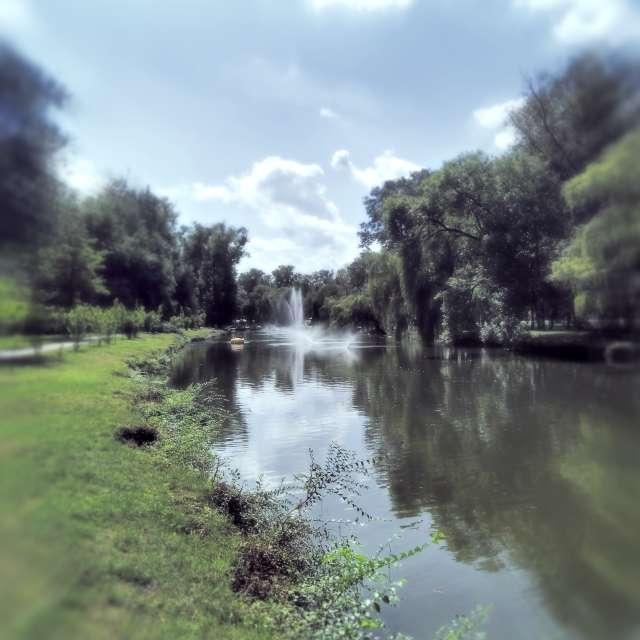 Summer park.