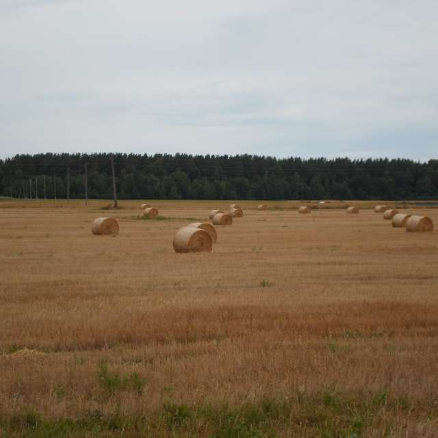 Сено на поле в августе