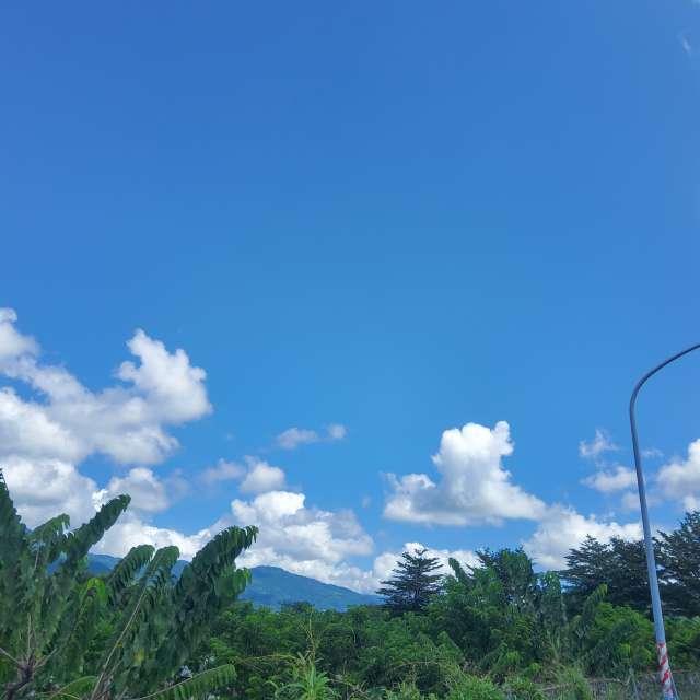 雲群與植物群對話