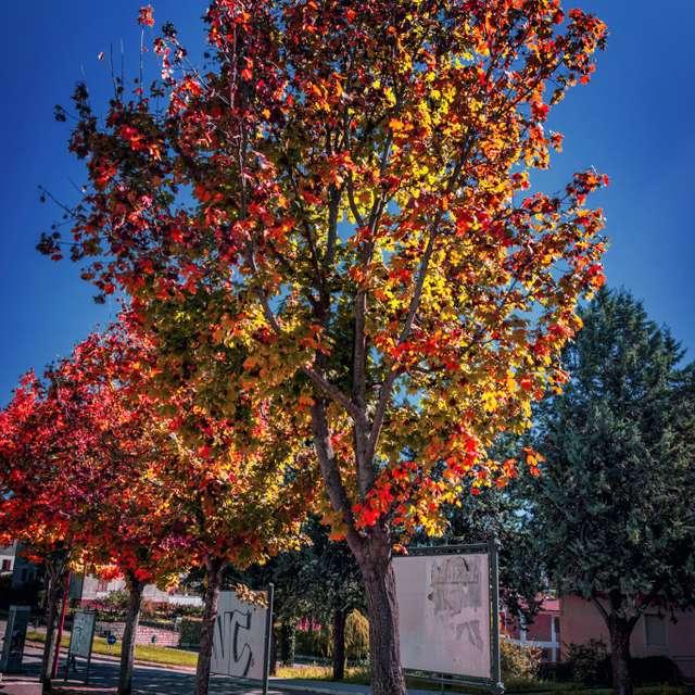 L'autunno delle foglie