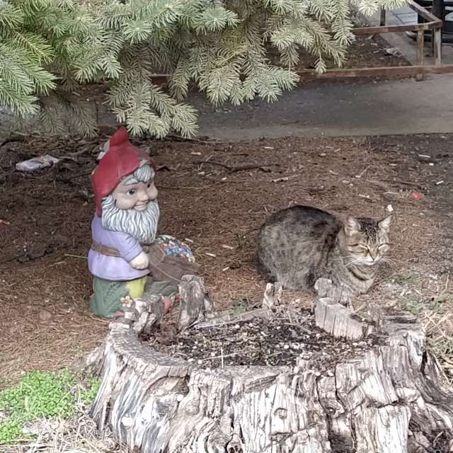 Джудже и коте на село