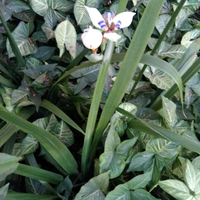 Orquídeas do inverno