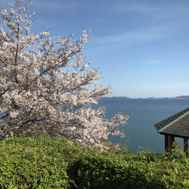 cherryblossom and the sea