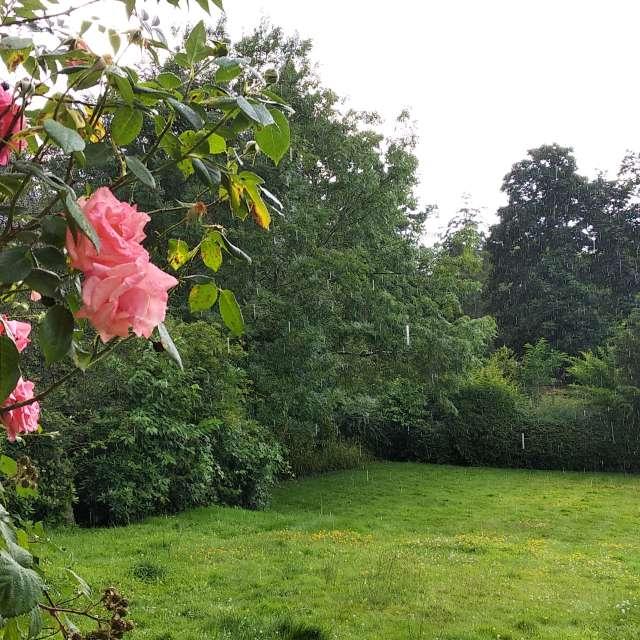 Rain in Bromley