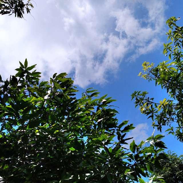Langit cerah