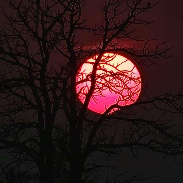 Hazy sunset behind dead trees