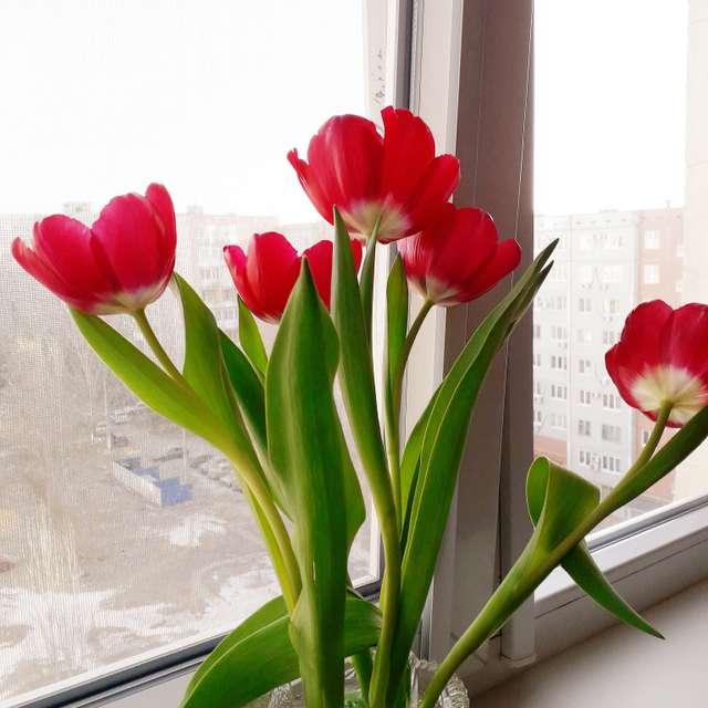Всех с праздником Весны!