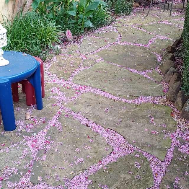 Flower petals cover kids area