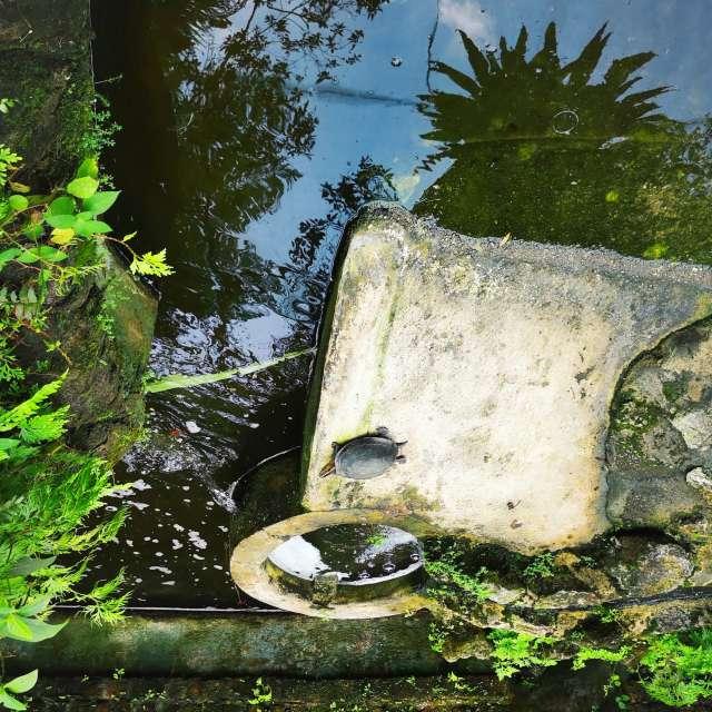 KualaLumpur_Turtle 🐢 Malaysia