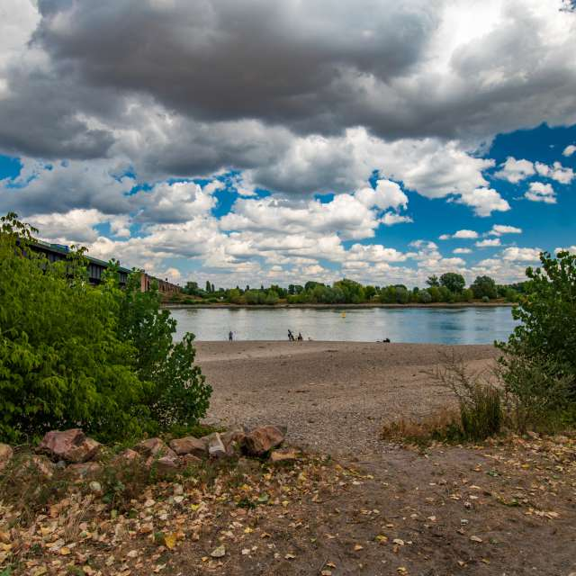Rhein bei Niedrigwasser