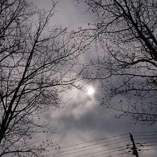 曇り空の下春待つ枯れ木
