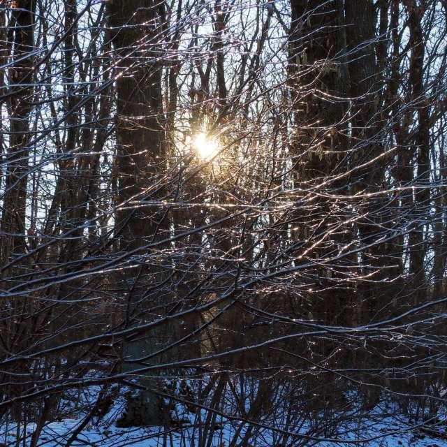 Sníh na větvích a'la pavučina