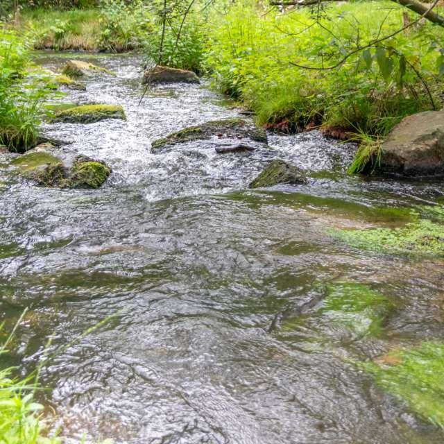 Idyllic creek with fish pass