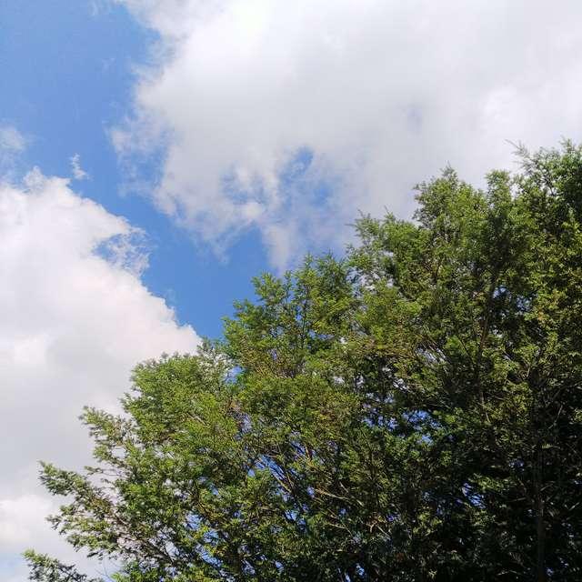 オンコの木と空