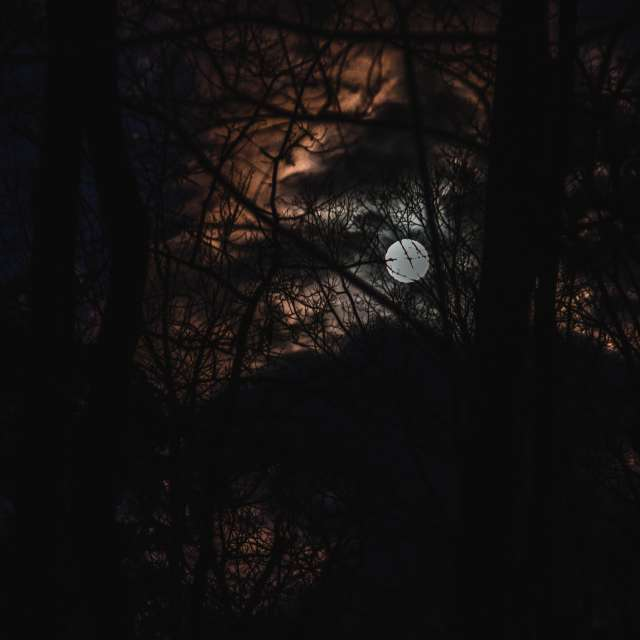 full moon rise through trees.