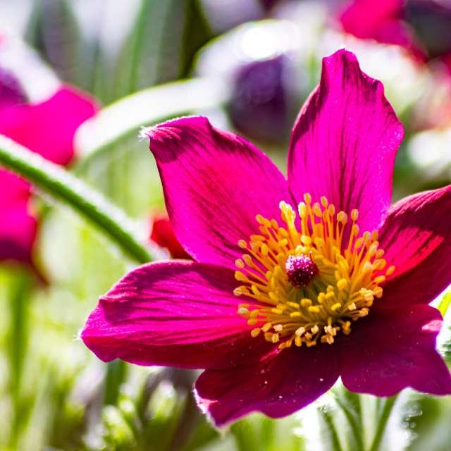 Filigree purple flower blossom