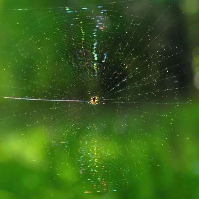 Spider Web Refraction