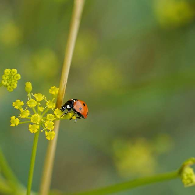 Ladybug on a small flower