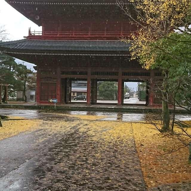 雨と落ち葉の降り頻る
