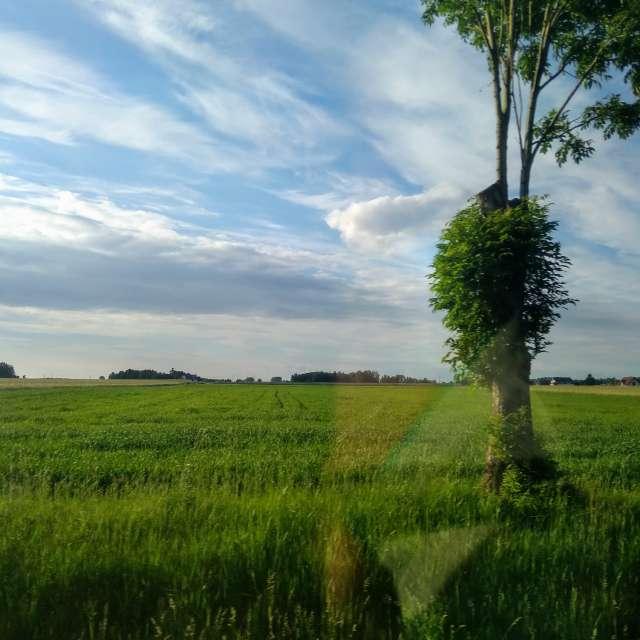 Niebo i drzewo