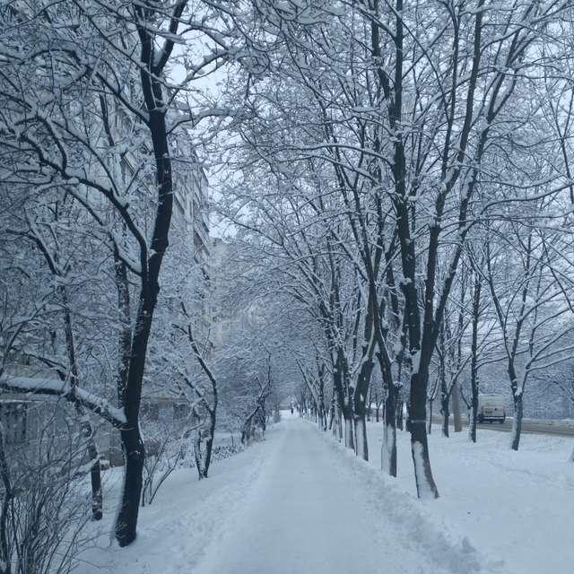 Зимние утро