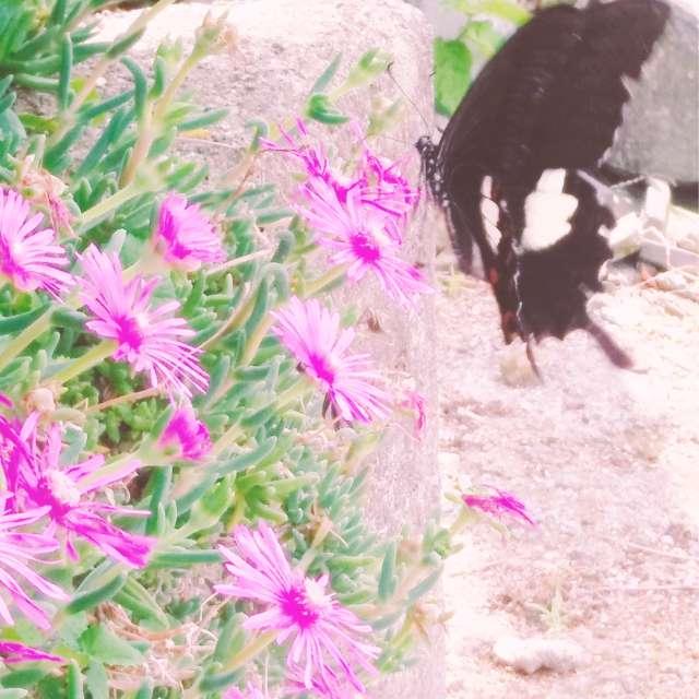 アゲハ蝶の休息