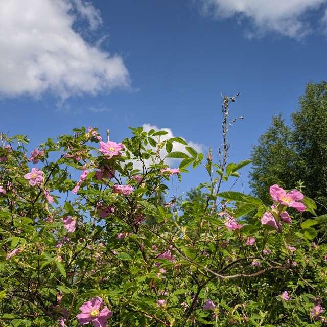Садовые цветы летом