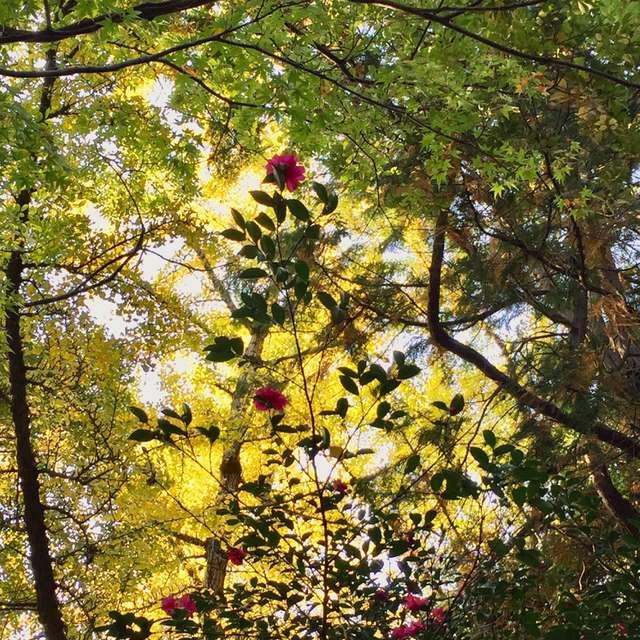 森の中のプリンセス