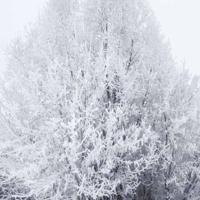 Дерево в снегу