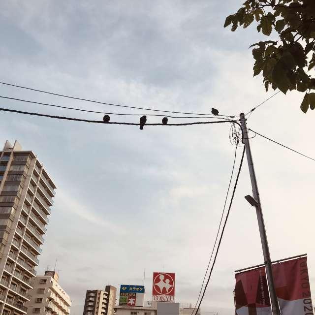 調布の駅近く鳩がいっぱい