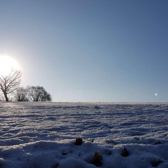 Lichtspiel mit Baum und Sonne