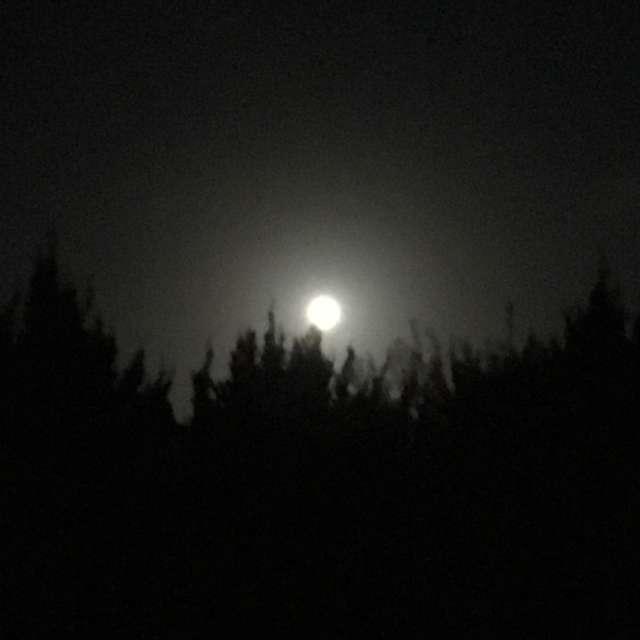 真夏の月夜