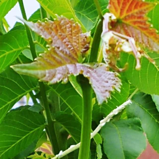 Leaf Closer