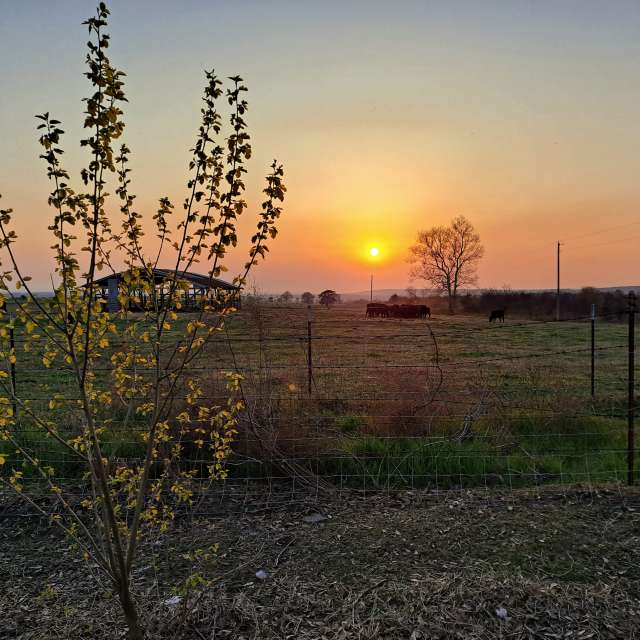 Spring Sunset in SubRosa