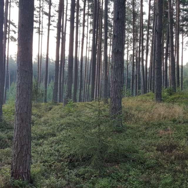 Утро в лесу Лиласте